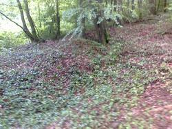 restes de tranchées crenelées dans bois