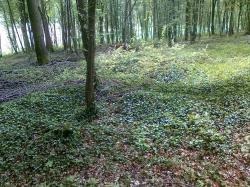 restes tranchées crenelées/env,3 KM bois
